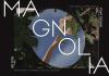 Magnolia Stylish Sans Font [13-Weights]